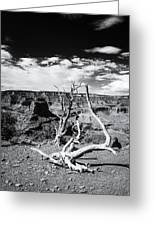Grand Canyon Landscape Greeting Card
