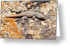 Grand Canyon Lizard Greeting Card