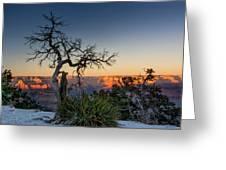 Grand Canyon Lone Tree At Sunset Greeting Card