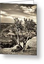 Grand Canyon Lone Tree Greeting Card