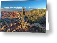 Grand Canyon Old Tree Greeting Card