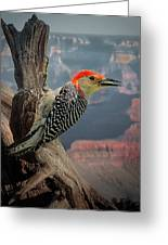 Grand Canyon Woodpecker Greeting Card
