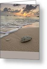 Grand Cayman Beach Coral At Sunset Greeting Card