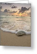 Grand Cayman Beach Coral Waves At Sunset Greeting Card