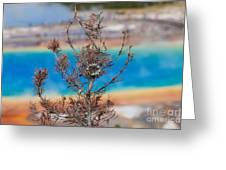 Grand Prismatic Wow Greeting Card