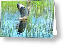 Grand Spring Goose   Greeting Card