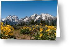 Grand Teton Arrow Leaf Balsamroot Greeting Card by Brian Harig