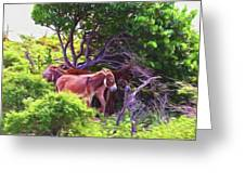 Grand Turk Donkeys In The Shade Greeting Card