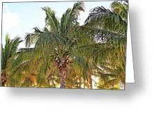 Grand Turk Palms On The Beach Greeting Card