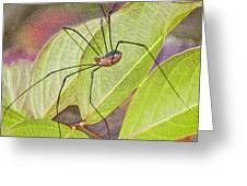 Grandaddy Long Legs Greeting Card