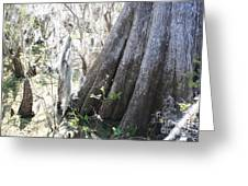 Grandfather Cypress Greeting Card