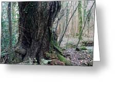 Grandfather Tree. Greeting Card