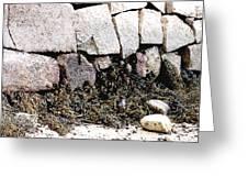 Granite And Seaweed Greeting Card