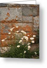 Granite Daisies Greeting Card