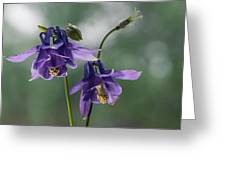 Granny's Purple Bonnet  Greeting Card