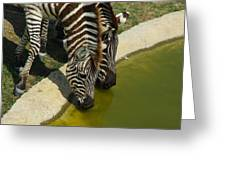 Grants Zebras - Thirst Quencher Greeting Card