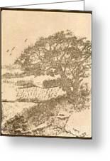 Grape Arbor On Brown Greeting Card