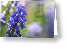 Grape Hyacinth II Greeting Card