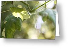 Grape Leaf Greeting Card