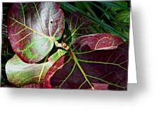 Grape Leaf Sheen Greeting Card