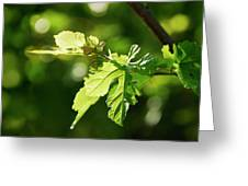 Grape Leaves In Spring Greeting Card