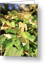 Grape Vine 3 Greeting Card