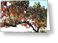 Grape Vine In Autumn Greeting Card