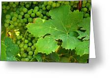 Grape Vine Heavy With Green Grapes Greeting Card