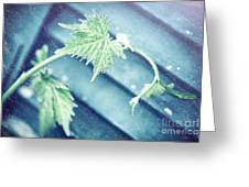 Grape Vine Old Style Background Greeting Card