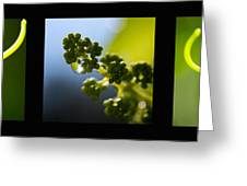 Grape Vines And Water Drops Triptych Greeting Card by Lisa Knechtel