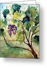 Grape Vines At Otter Creek Greeting Card