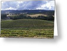 Grape Vines On Opolo Vineyards Greeting Card