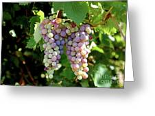 Grapes In Color  Greeting Card