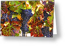 Grapes On Vine In Vineyards Greeting Card