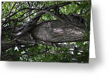 Grapevine Covered Tree Greeting Card