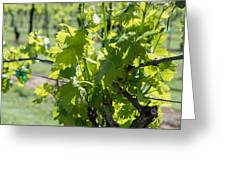 Grapevine In Early Spring Greeting Card