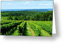 Grapevines On Old Mission Peninsula - Traverse City Michigan Greeting Card