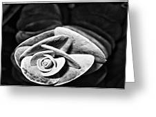 Graptopetalum Greeting Card