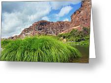 Grass Along John Day River In Central Oregon Greeting Card