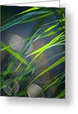 Grass And Evening Light Greeting Card