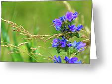 Grass And Flower  Greeting Card