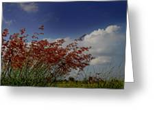 Grass And Sky Greeting Card
