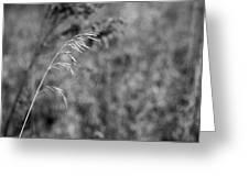 Grass Blade Greeting Card