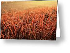 Grass Dyed In The Morning Glow Greeting Card