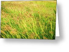 Grass Field Landscape Illuminated By Sunset Greeting Card