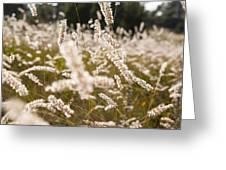 Grass Field Greeting Card