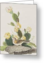 Grass Finch Or Bay Winged Bunting Greeting Card