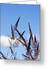 Grass Florets Greeting Card