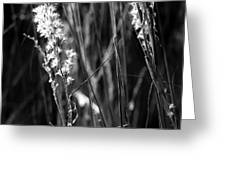 Grass Flowers Greeting Card
