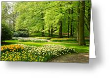 Grass Lawn With Daffodils  Greeting Card